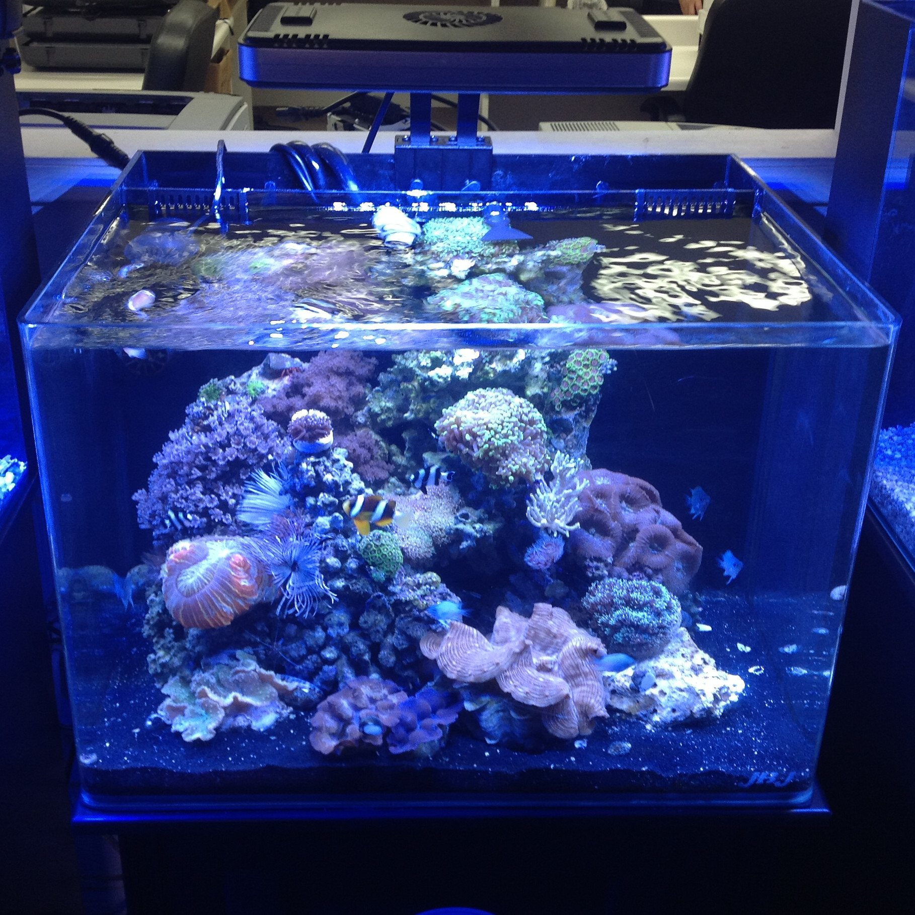 Nano led aquarium fish tank lighting - Stocking Power Compact Lighting Submariner Uv Sterilizer As Well As All Sizes Of The Nano Cube Tanks